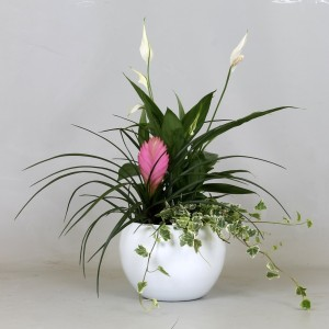 Arrangements Tillandsia