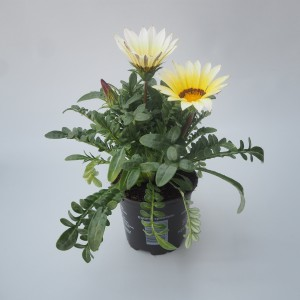 Gazania rigens 'New Day White'
