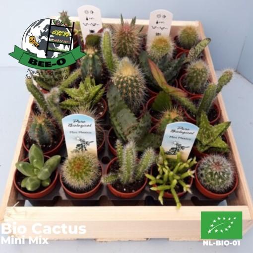 Cacti MIX (Bee-O)
