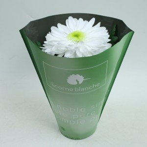 Chrysanthemum LICORNE BLANCHE