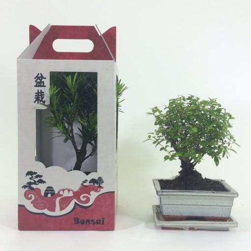 Bonsai MIX (M&M Garden)