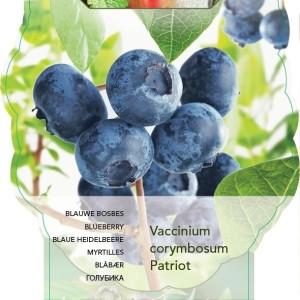 Vaccinium corymbosum 'Patriot' (BOGREEN Outdoor Plants)