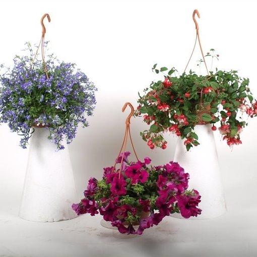 Hanging plants MIX (Kwekerij Baas)